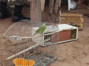 Aves foram apreendidas e proprietário da casa multado (Foto: Catarina Costa/G1 PI)