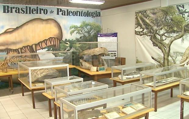 Laboratório repune cerca de seis mil peças catalogadas (Foto: Bom Dia Amazônia)