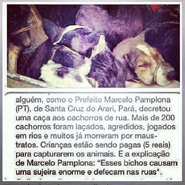 Kiko, do KLB, posta sobre animais em seu Instagram (Foto: Instagram / Reprodução)