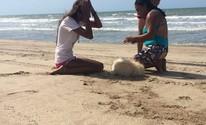 Animal é atropelado em areia de praia no Piauí (Janaina Leocadio/Arquivo Pessoal)