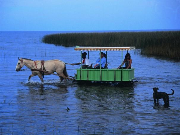 Transporte em área alagadiça da Lagoa dos Patos, na cidade de São Lourenço do Sul  (Foto: Divulgação/SETUR)