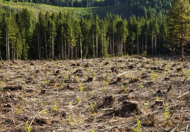 Desmatamento ; derrubada de árvores ;  (Foto: Cavan Images via Getty Images)