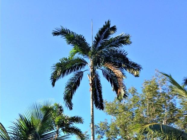 Previsão é de céu claro em RO (Foto: Vanessa Vasconcelos/G1)