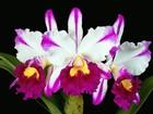 Sorocaba recebe exposição de orquídeas e feira de livros
