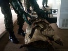 Mais de 70 quilos de carne de jacaré são apreendidos em feira no Amapá