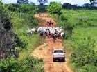 Operação destina 1,6 mil bois ilegais no Pará ao Programa Fome Zero