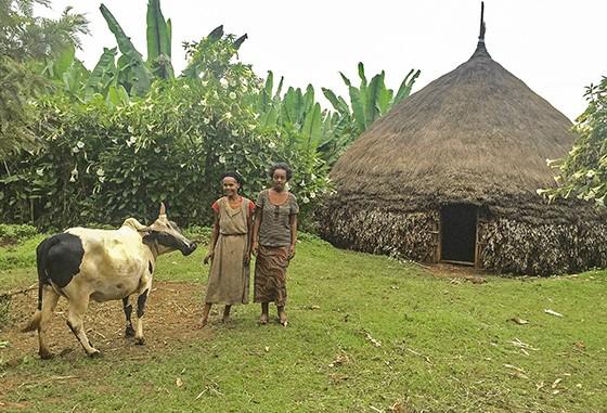 Cena típica rural etíope, com a sempre presente plantação de ensete ao fundo  (Foto: Giselle Paulino/ÉPOCA)