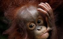 Recém-nascidos no Zoo de Cingapura