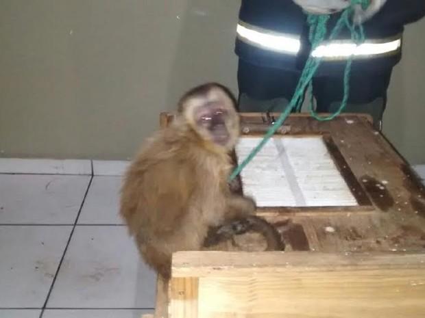 Animal está detido na sede do Corpo de Bombeiros e será entregue ao Ibama (Foto: Maurílio Alves / Corpo de Bombeiros)