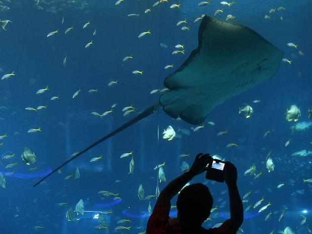 Um homem tira fotos de uma arraia no Aquário de Cingapura. O local que abriga mais de 80 mil animais de mais de 800 espécies em 42,8 milhões de litros de água foi eleito como o maior do mundo pelo Guinness (Foto: Edgar Su/Reuters)