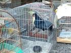 Polícia Ambiental apreende 143 aves silvestres em Itapejara d'Oeste, no PR