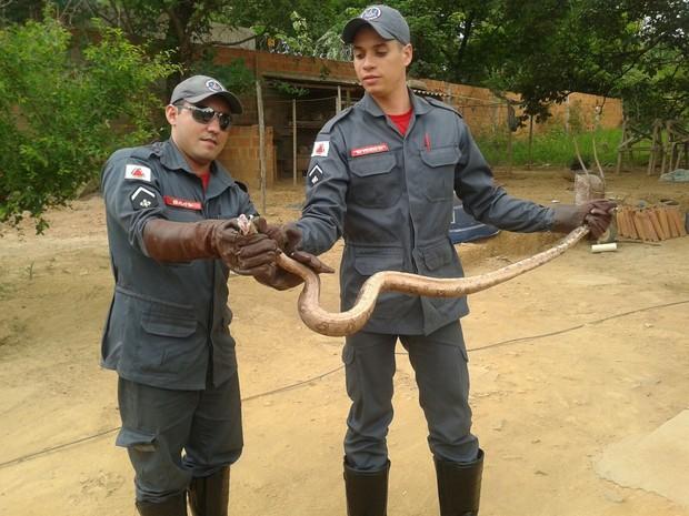 Cobra foi encontrado no Bairro Magues (Foto: Divulgação / Corpo de Bombeiros)