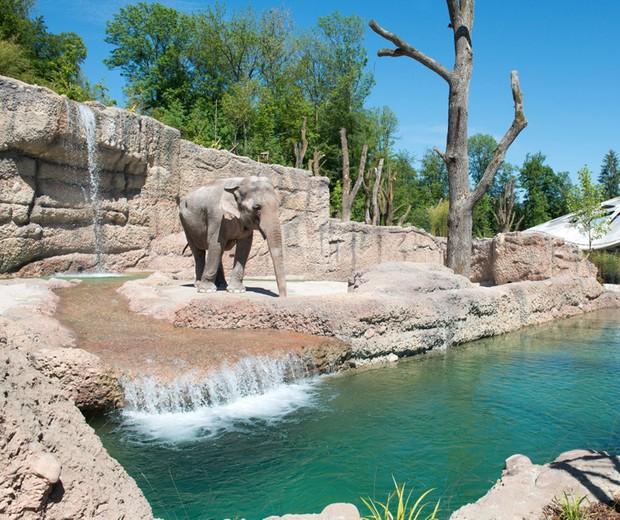 Asiatischer Elefant Elephas maximus (Foto: Zoo Zürich)