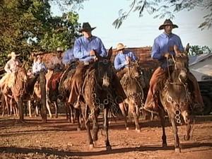 Romaria Nossa Senhora da Abadia Uberaba transporte mula cavalgada (Foto: Reprodução/ TV Integração)