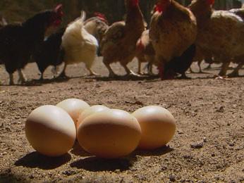 Casca do ovo da galinha tem substâncias nutritivas (Foto: Reprodução / TV Globo)