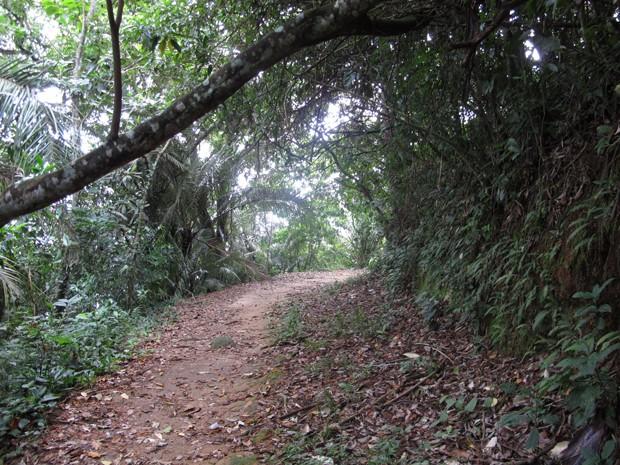 Trilha das Ruínas conserva uma das áreas mais preservadas da Mata Atlântica (Foto: Anna Gabriela Ribeiro/G1)