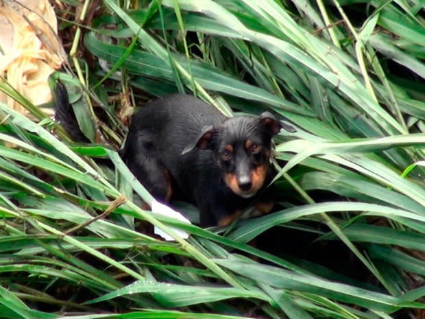 Cachorro fica ilhado em canal de uma estação de ônibus na região do Iguatemi, em Salvador (Foto: Imagens/TV Bahia)