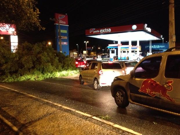 Árvore caiu em frente a um posto de combustível na Av. Presidente Kenedy (Foto: Jaqueliny Siqueira)