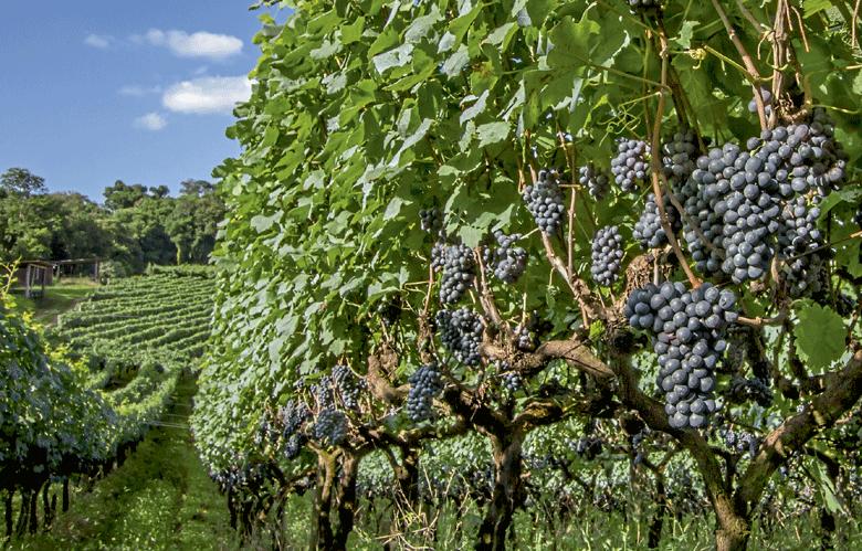 produtos-e-mercados-vinho-edicao-371-setembro-2016 (Foto:  )