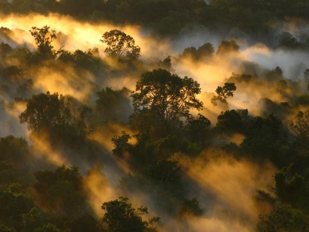 Estudo revela que Amazônia pode estar absorvendo menos CO2 por morte precoce de árvores (Foto:  Peter van der Sleen/Nature)