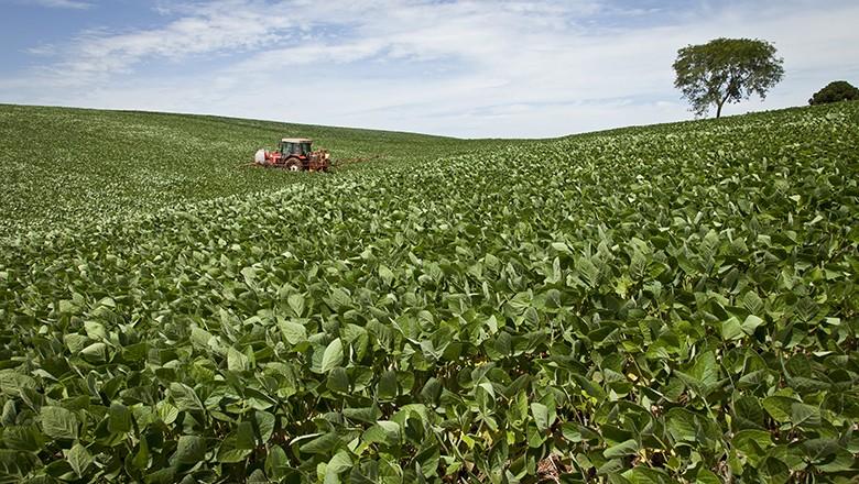 soja-colheita (Foto: Marcelo Curia/Ed. Globo)