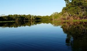 Pantanal, com vasta planície inundada (Foto: Agron)