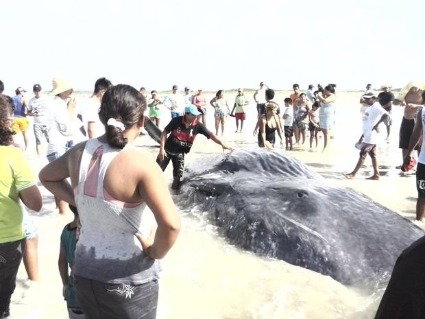 Corpo do mamífero deve ser retirado na terça-feira (8) (Foto: Iris Santos / Rádio Tropical de Marudá)
