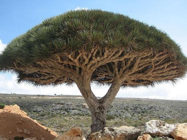 Socotra, arquipélago de ilhas no Oceano Índico, pertencentes ao Iêmen (Foto: Boris Khvostichenko/Creative Commons)