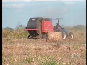 Produção de feno de capim acontece na cidade de Aparecida do Rio Negro, no Tocantins (Foto: Reprodução/TV Anhanguera TO)