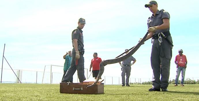 Jiboia treino Botafogo-SP (Foto: Reprodução EPTV)