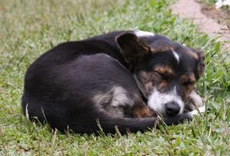 deve-se proteger o pet do frio (Foto: Reprodução/Freepik)
