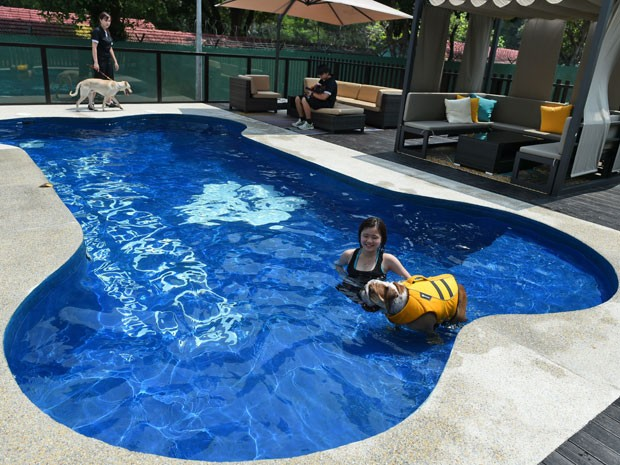 G1 hotel de luxo para c es tem piscina em forma de osso for Formas de piscinas