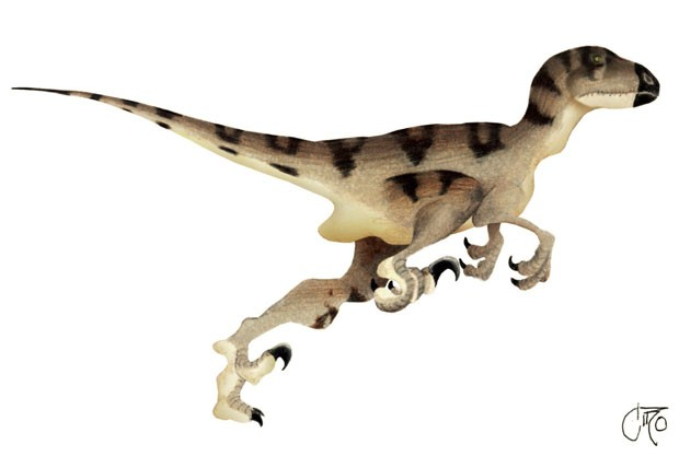 Representação gráfica mostra um utahraptor. Peça de fibra de vidro rrepresentando o animal foi roubada em museu na Austrália (Foto: Divulgação/ Wikimedia Commons)