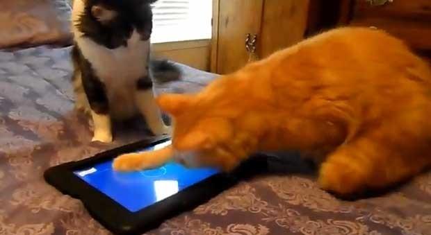 """Gatos se divertem jogando joquinho de """"caçar"""" peixe (Foto: Reprodução/YouTube/Tigerpixie)"""