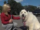 Lista reúne 'cão prefeito' e mais histórias curiosas sobre eleições
