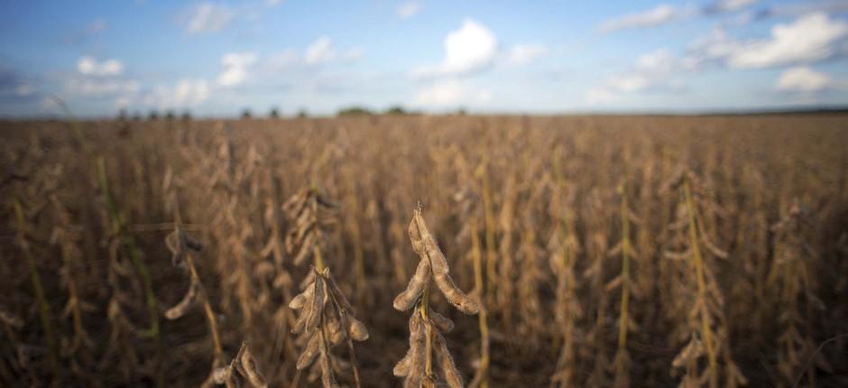 agricultura-soja-safrinha-matogrosso (Foto: Emiliano Capozoli/Ed. Globo)
