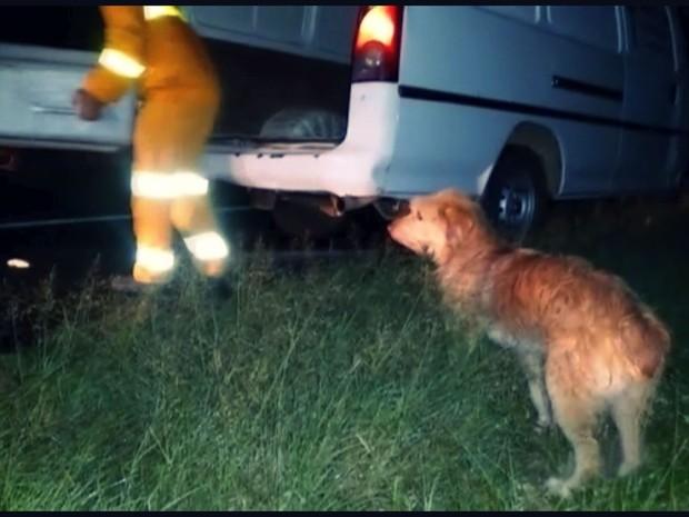 Mesmo quando o dono estava sendo retirado da pista, o cão não saiu do lado do corpo. (Foto: Hélder Almeida)