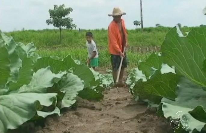Iranduba é um dos municípios que mais produz hortaliças (Foto: Amazônia TV)