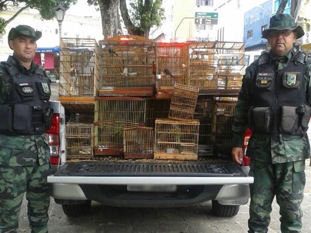 Nesta quinta, foram apreendidas 38 aves (Foto: Tenente coronel Paulo Sérgio Oliveira/Polícia Ambiental)