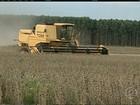 Seca provoca perdas nas plantações de soja do Mato Grosso do Sul