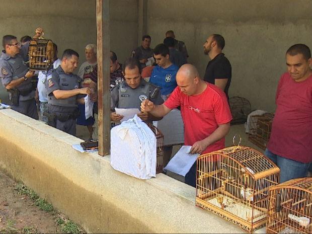 Polícia apreende 22 pássaros em torneio de canto em Jacareí (Foto: Reprodução/TV Vanguarda)