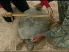 Biólogos de GO acompanham a desova da tartaruga-da-amazônia