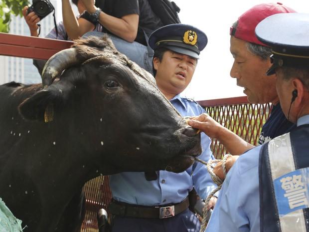 Polícia japonesa impede que o pecuarista Masami Yoshizawa, de Fukushima, tire um boi doente de seu caminhão. Protesto aconteceu em frente ao Ministério da Agricultura, em Tóquio, nesta sexta (20) (Foto: AP Photo/Koji Sasahara)