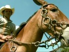 Encontro de muladeiros reúne mais de cem criadores em Minas Gerais