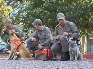 Cães chegaram na quarta-feira ao comando em Santa Cruz do Sul, RS (Foto: Reprodução/RBS TV)