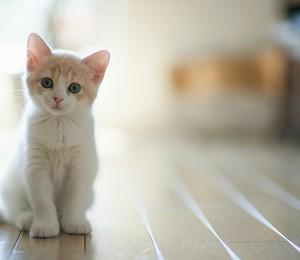 Gatos se adaptam a ficar sozinhos mais facilmente do que cães (Foto: Shutterstock)