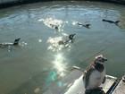 Centro de recuperação trata pinguins que surgem no litoral do RS no verão