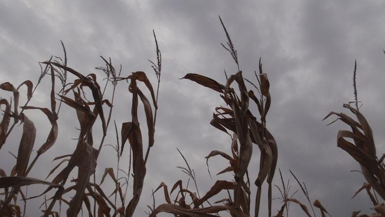 chuva-milho-graos-clima (Foto: Anthony Easton/CCommons)