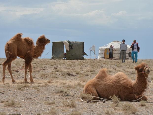 Exemplares de camelo-bactriano são vistos na cidade de Khanbogd, na Mongólia (Foto: Mark Ralston/AFP)