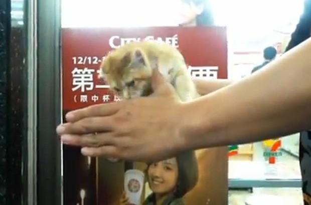 Mágico tirou gato de uma das mãos em Taiwan (Foto: Reprodução)